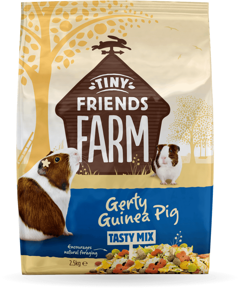 tff-gerty-guinea-pig-front