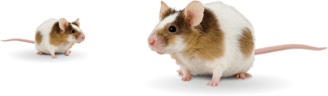mouse-group