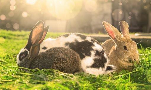 Rabbits-sunlight