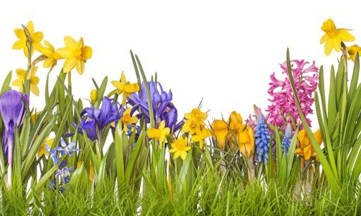 Spring plants toxic